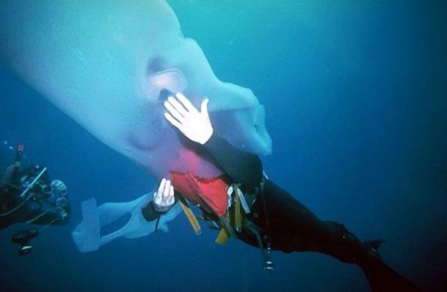Огромная светящаяся морская тварь (фото + видео)
