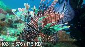 ������������ ����� / Amazing Ocean (2012) DVDRip